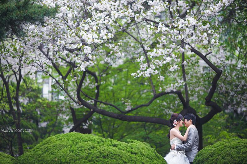 seoul sakura pre wedding