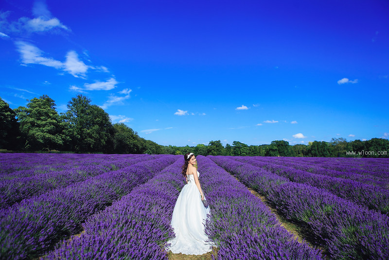 mayfield lavender pre wedding